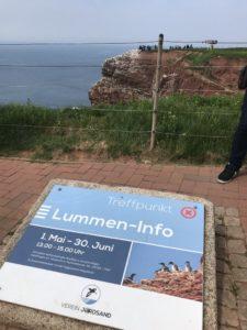 Lummen-Info Punkt auf Helgoland