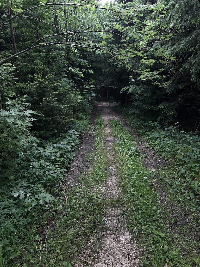 Auf einem breiten Weg geht es in den Wald hinein