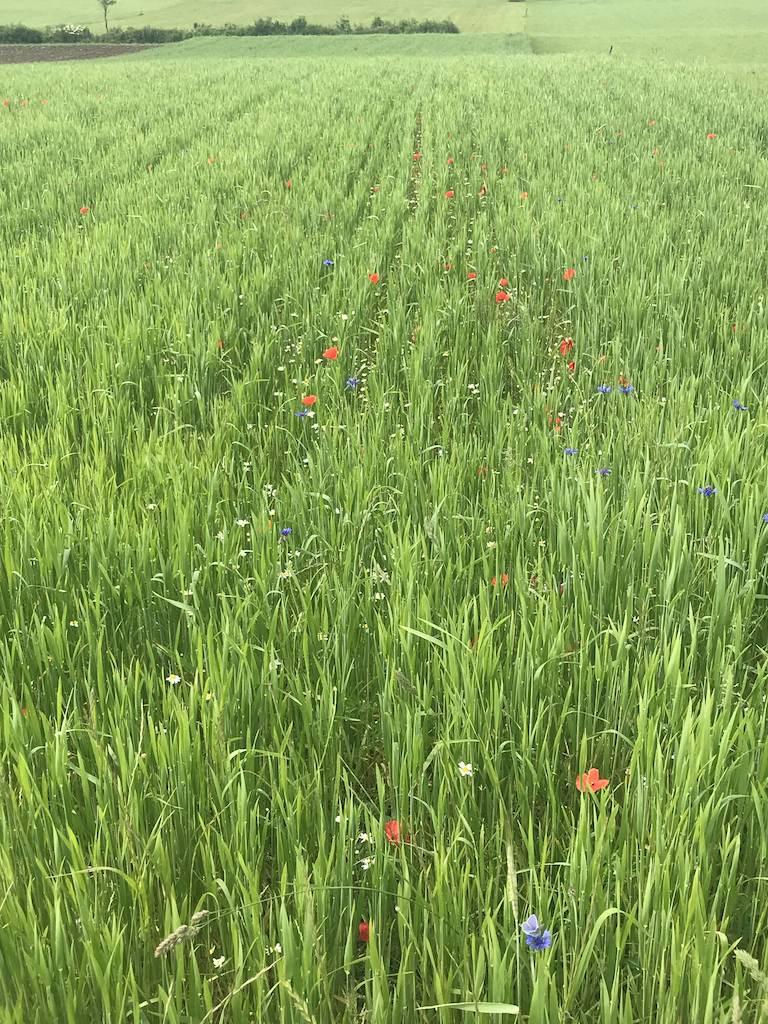 Blick auf ein schönes Feld mit Frühlingsblumen auf dem Lußer Stauseeweg