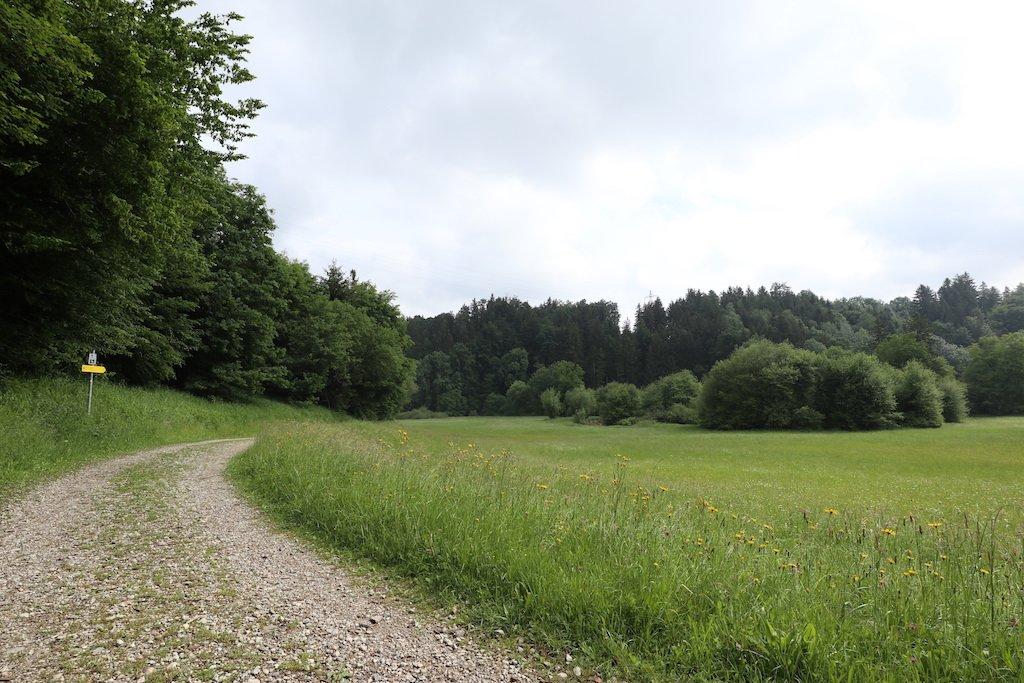 Raus aus dem Wald, ab auf einen gemütlichen Weg am Waldrand auf dem Lußer Stauseeweg