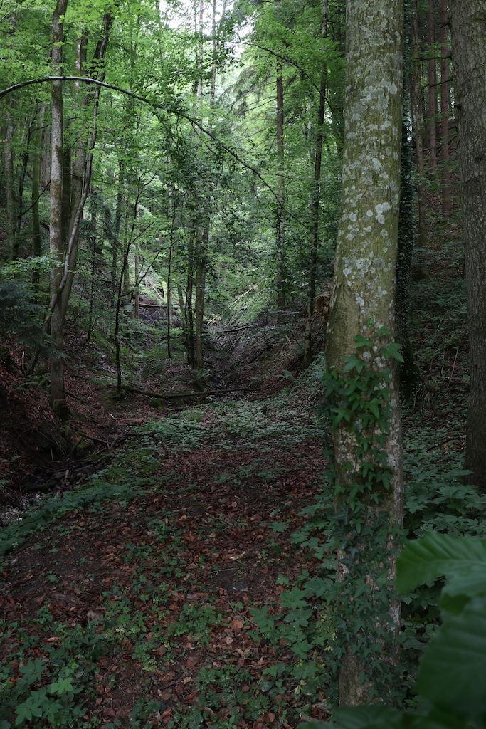 Ein Blick in den Wald auf meiner Wanderung - herrliches durcheinander!