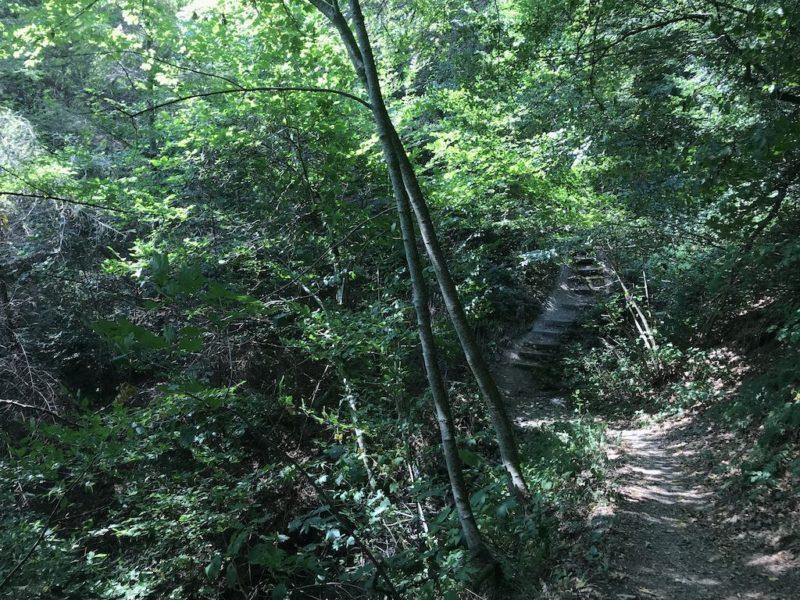 Herrliches Grün und ein paar Stufen vor mir im NaturWanderPark delux auf Luxemburger Seite
