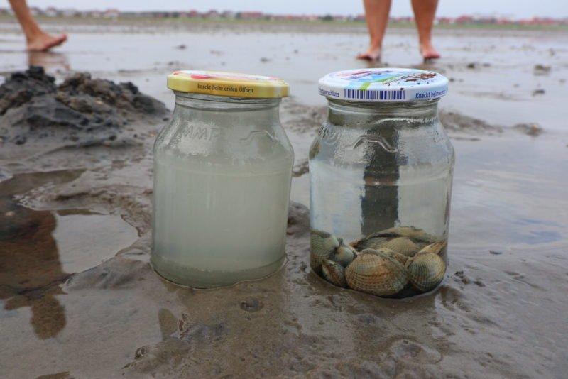 Wie von Geisterhand gereinigtes Wasser rechts im Glas - wobei die Muscheln die Geister sind...