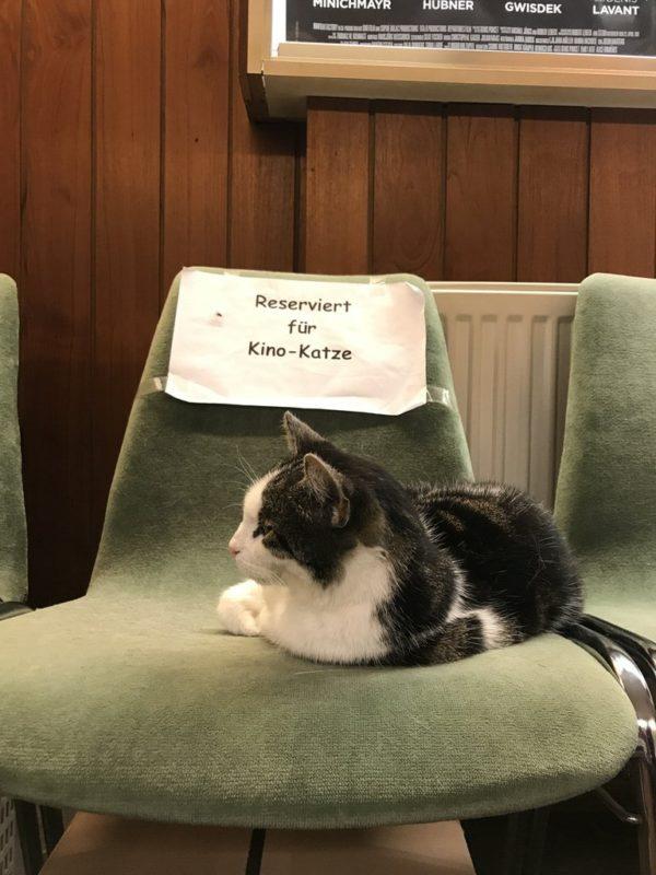 """""""Reserviert für Kino-Katze"""" im Inselkino Juist"""