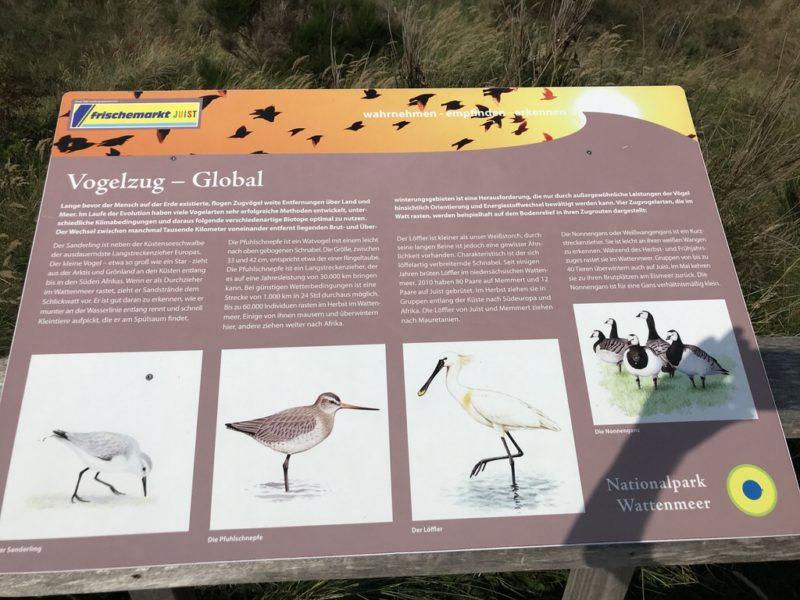 Informationstafel über den Vogelzug