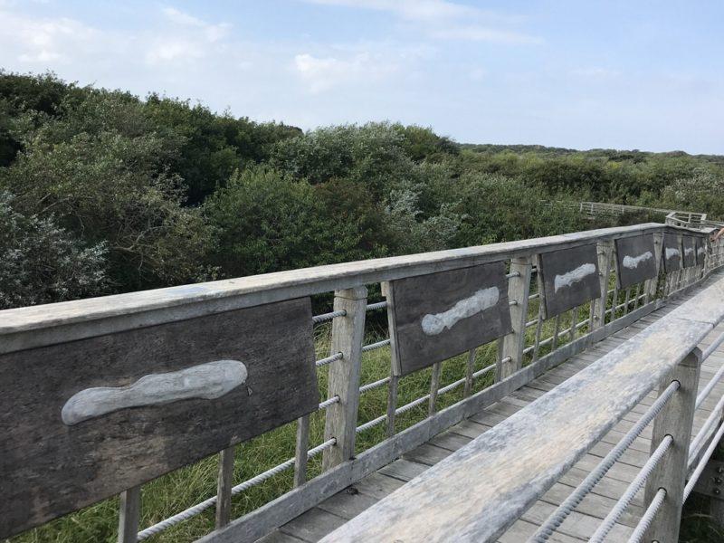 Entwicklung der Insel Juist seit 1650 auf Holzreliefs