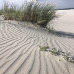 Am Strand von Juist...