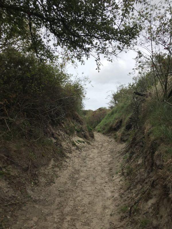 Der Weg zur Aussichtsplattform am Hammersee Juist von der Strasse zur Domäne Bill her kommend