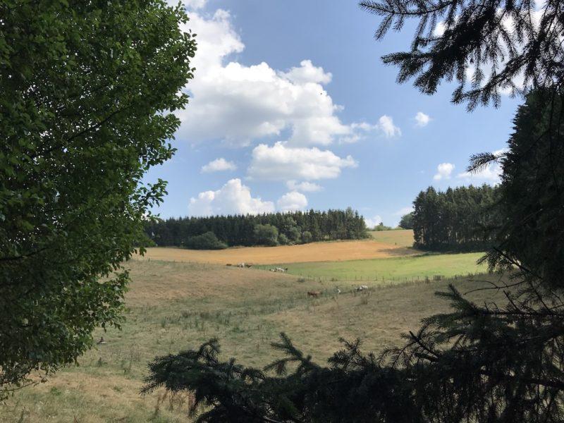 Tiere auf der Weide am Rande des Bach Pfads