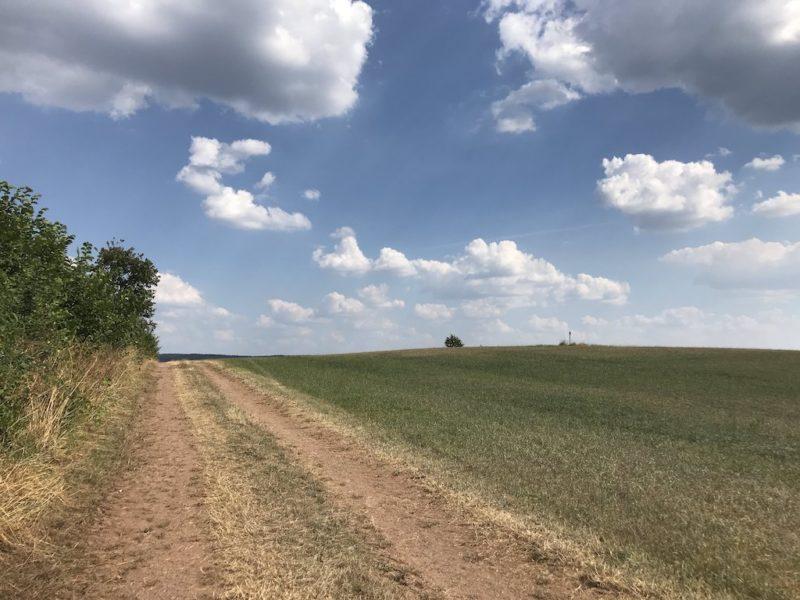 Ab in die Hitze in die pralle Sonne nach etwa 10-11 km auf dem Bach Pfad