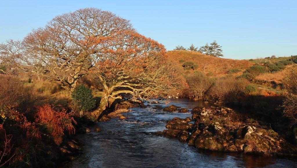 Ein wunderschöner Baum am Fluss bei Teelin
