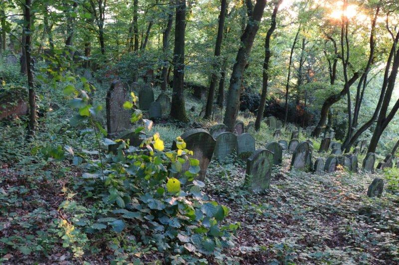 Gräber auf dem Jüdischen Friedhof Bingen