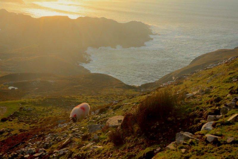 Herrlicher Blick auf das Meer mit Schafen eine Weile vor dem Sonnenuntergang oberhalb von Glencolumbkille