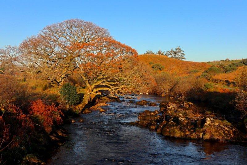 Ein Baum und ein Flüsschen bei Carrick...