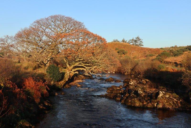 Krasser Baum bei Teelin, Donegal, Irland