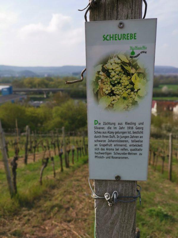 An den Weinbergen hängen auch immer wieder Schilder, die Dir etwas zu den angebauten Reben erzählen