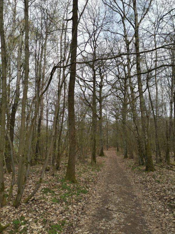 Durch den Wald geht es