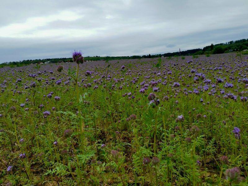 Was für ein schönes Blumenfeld am Wegesrand
