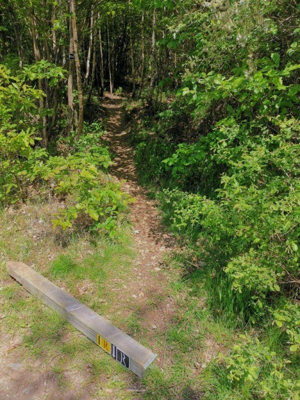 Unscheinbare Abzweigung auf den Pfad durch einen Birken-Buchen-Mischwald