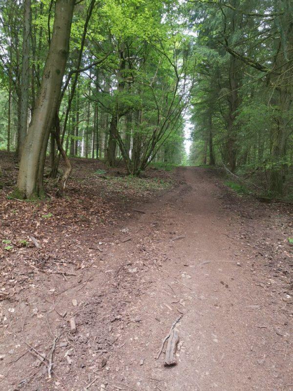 Kurzes steileres Stück im Wald