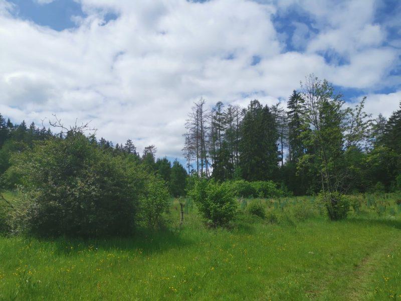 Hier auf der Wiese im Wald empfängt uns lautes Vogelgezwitscher