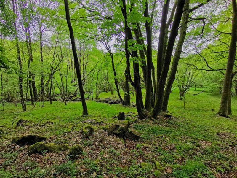 Was für ein sattes grün am Wegesrand auf der Breitscheider Höhlentour