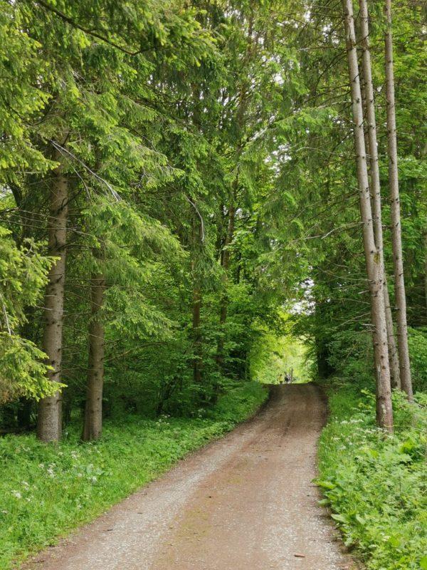 Auch andere Menschen wandern auf der Rothaarsteig-Spur Breitscheider Höhlentour