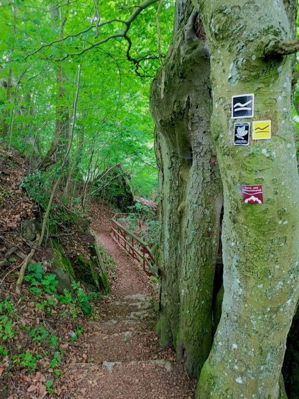 Wunderschöner Weg abwärts in die Schlucht auf der Breitscheider Höhlentour