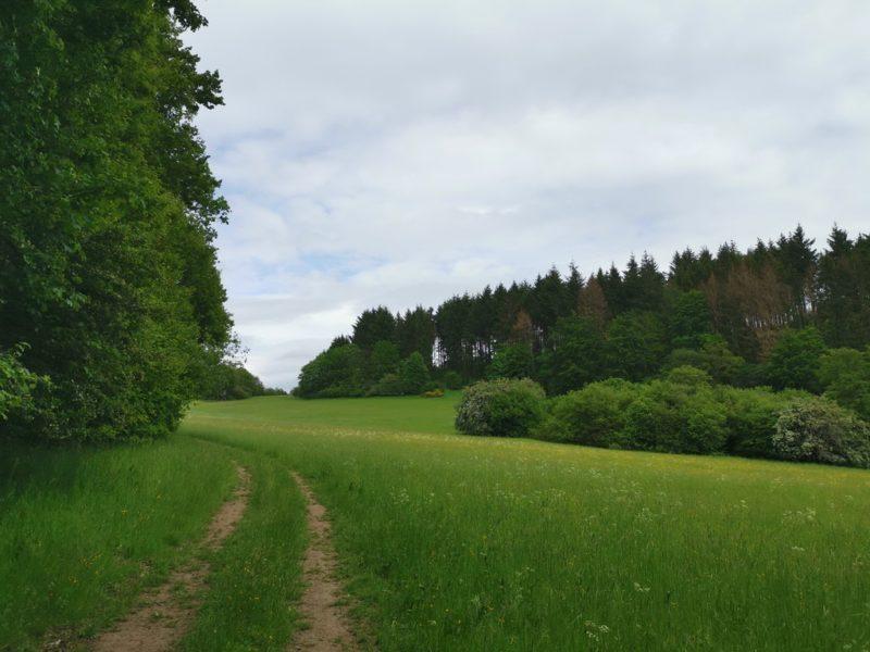 Und wieder geht es raus aus dem Wald