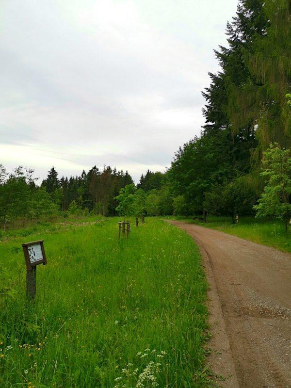 Überblick über den Pfad mit den Bäumen des Jahres
