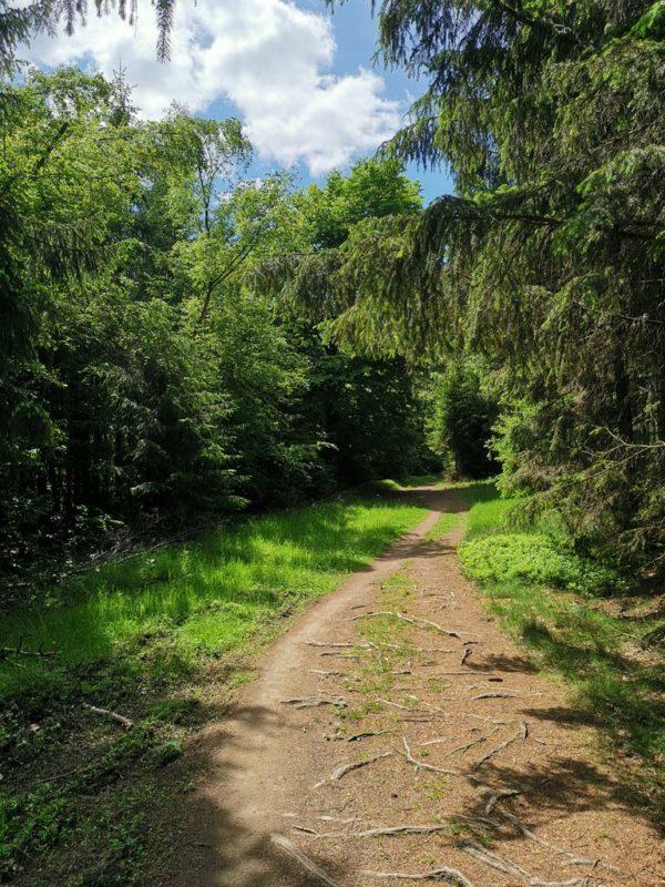 Der Weg wird wieder schmaler und lässt auf Schatten hoffen
