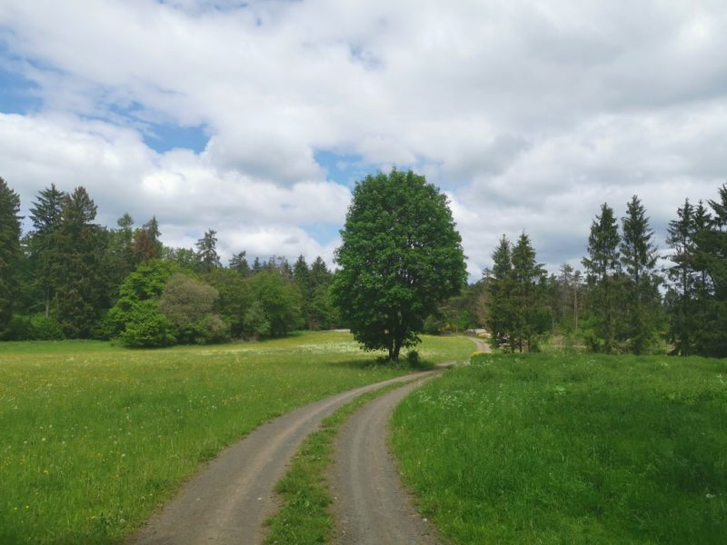 Der Wacholderweg schlängelt sich durch Wald und Wiesen