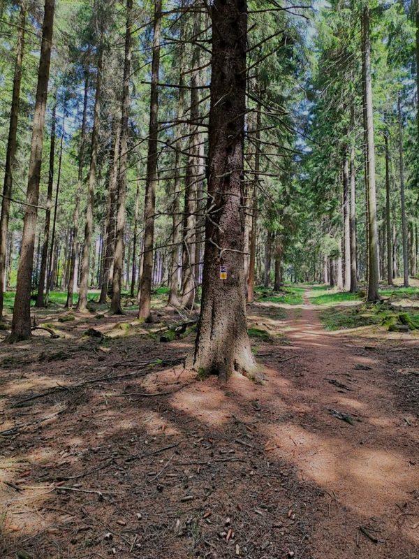 Ein schmaler Waldweg führt weiter nach oben