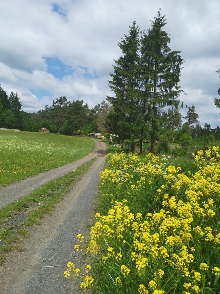 Wandern in Hessen: Auf der Rothaarsteig-Spur Wacholderweg gibt es tolle Aussichten!