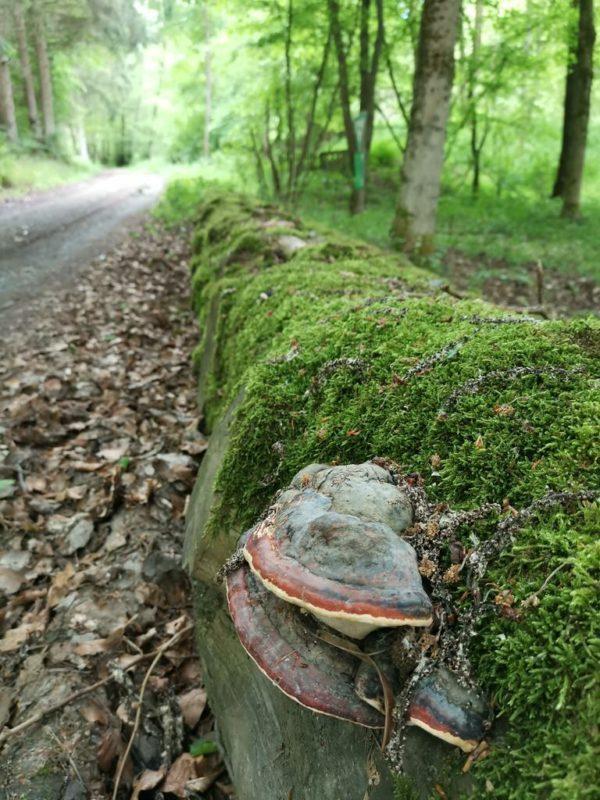 Aber auch Bäume mit Schwämmen liegen am Wegesrand