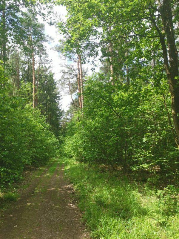 Waldweg nach dem Sportplatz