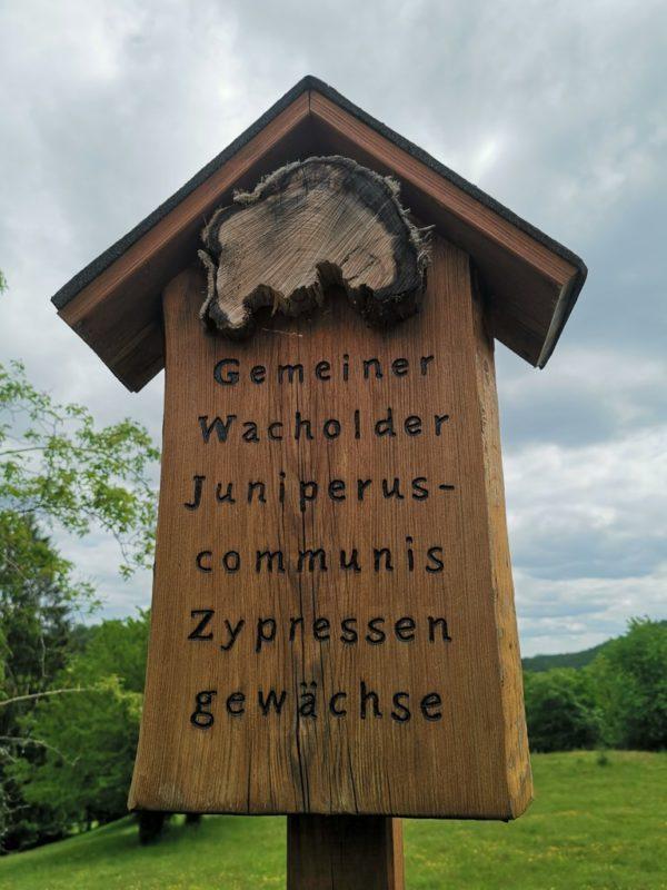 Hinweis auf Wacholder auf dem Wacholderweg auf dem Teil des Baumlehrpfades