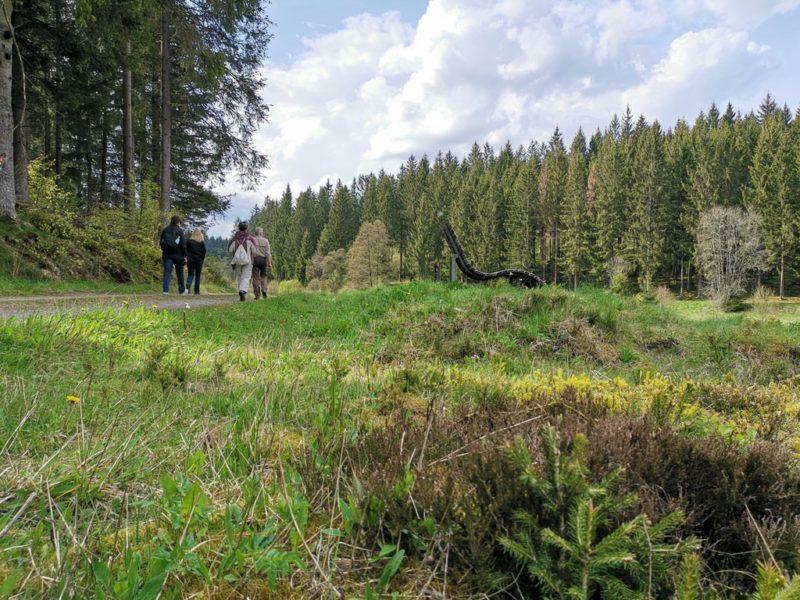Da laufen meine Bloggerkolleginnen mit Ranger Ralf ein kleines Stück des Rothaarsteigs