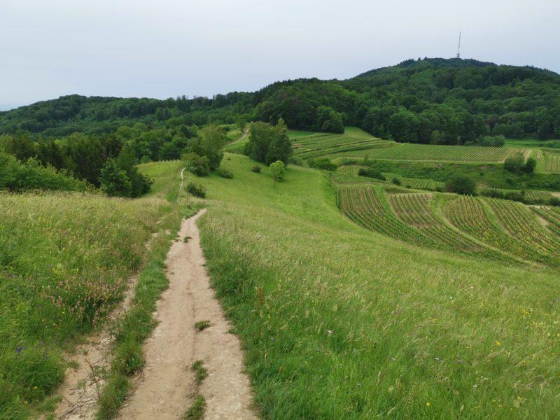 Schöner Weg über die Wiese am Weinberg entlang