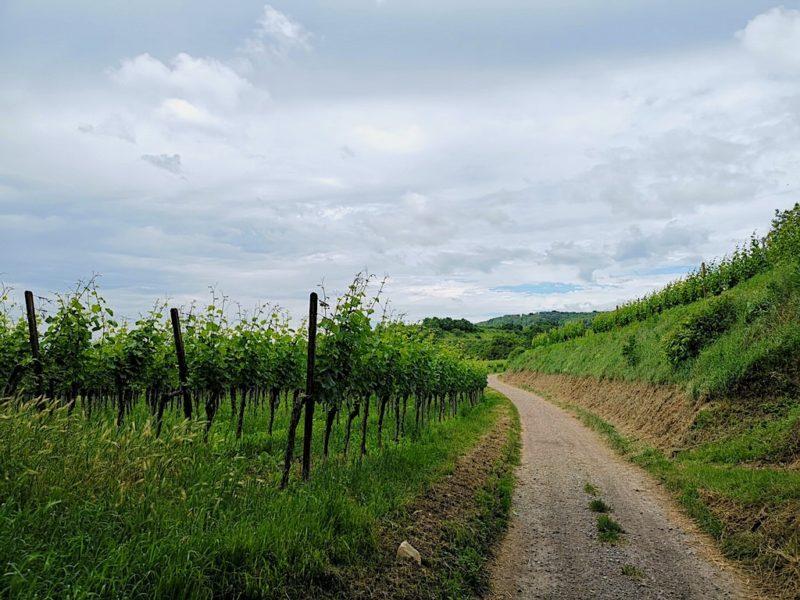 Raus aus Bötzingen auf dem Brunnenpfad und ab in den Weinberg