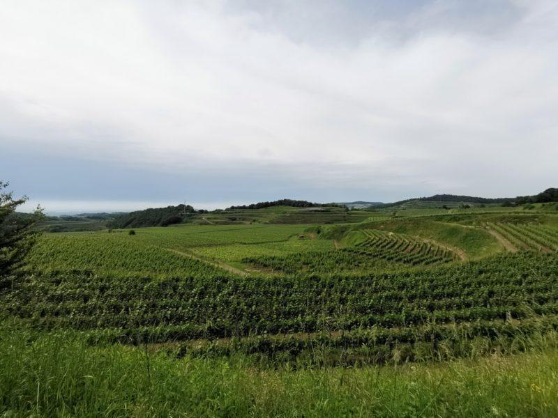 Der Ausblick auf die Weinberge