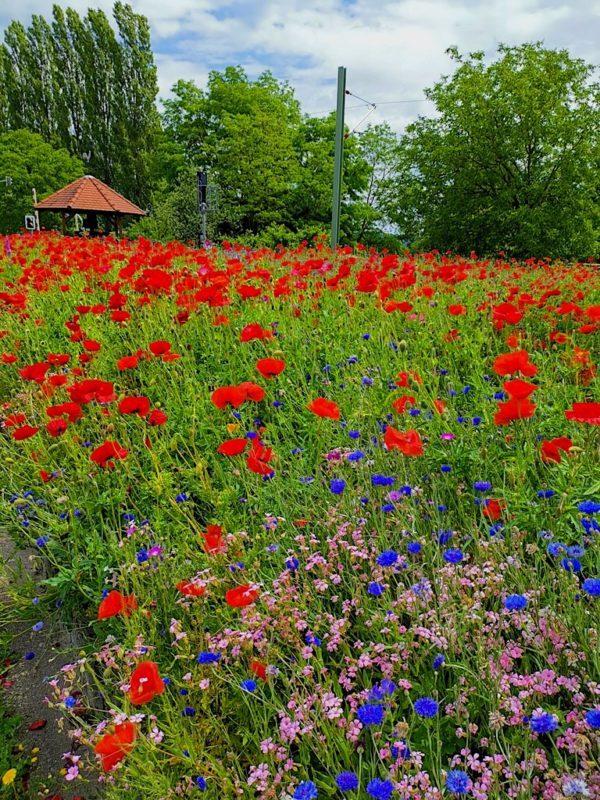 Wundervoll farbenprächtiger Blumengarten