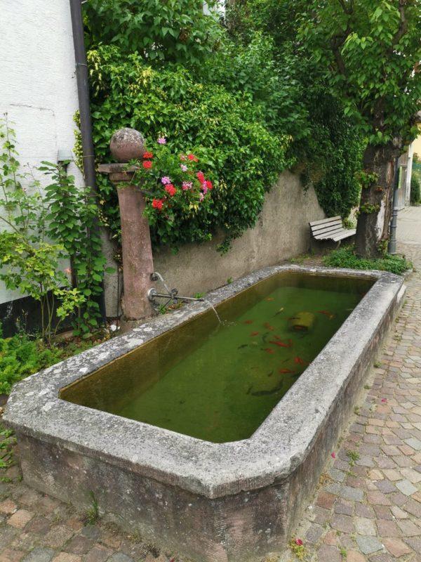 Wasserbrunnen mit Infotafel zur Tuchbleiche