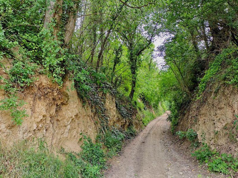 Die Buntehahlegasse bei Bötzingen ist bis zu 10 Meter tief in die Lösswände eingeschnitten