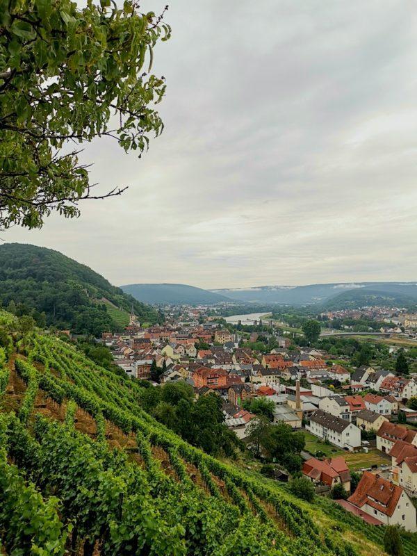 Blick aus den Weinbergen auf die Altstadt von Klingenberg