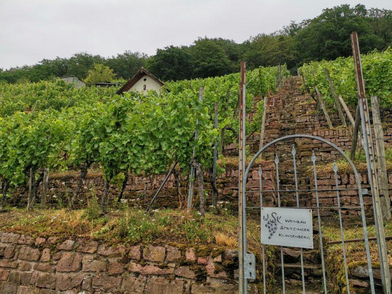 Ein Teil der Anbaufläche des Bio Weinguts Stritzinger in Klingenberg