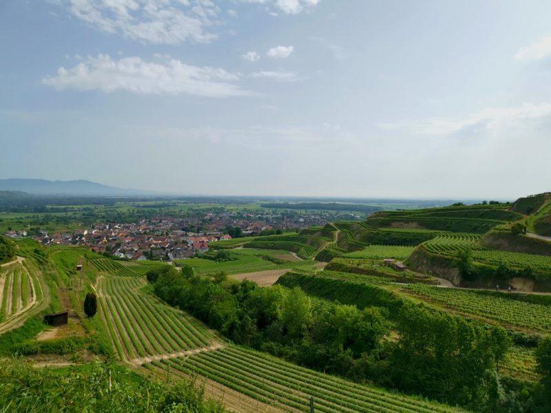Tolle Aussicht auf dem Kaiserstuhlpfad auf Ihringen
