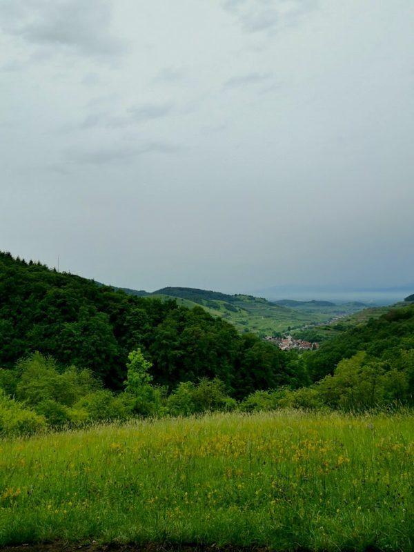 Tolle Aussicht quer über die Wiese in das Tal
