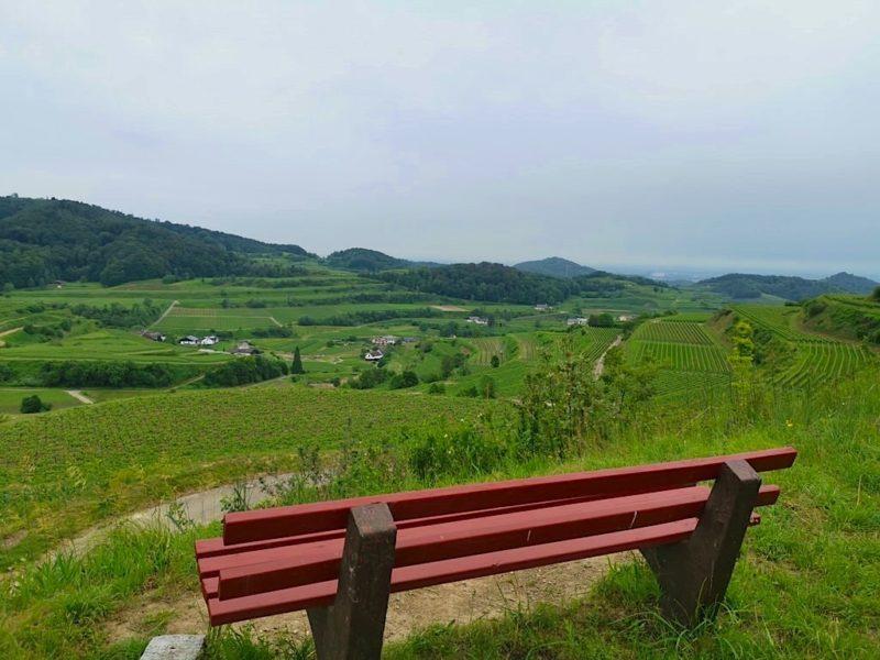 Aussicht über die Weinberge nach Bickensohl