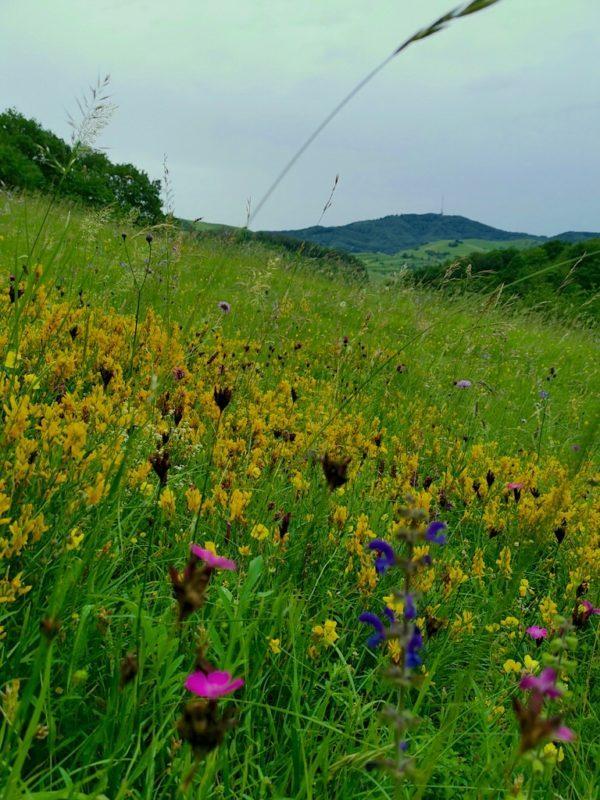 Wunderschöne bunte Blumenwiese